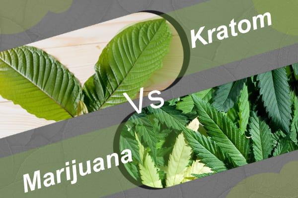 Kratom vs. Marijuana - An Ongoing Debate