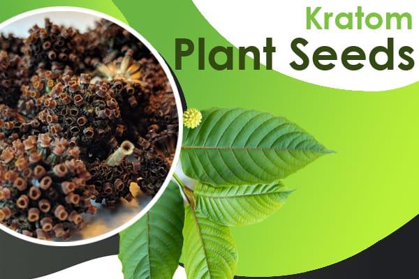 kratom plant seeds